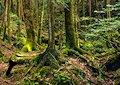 Santuario nella foresta - Fun forest shrine fun escape