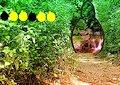 <b>Fuga dalla foresta di arbusti - Shrub forest escape