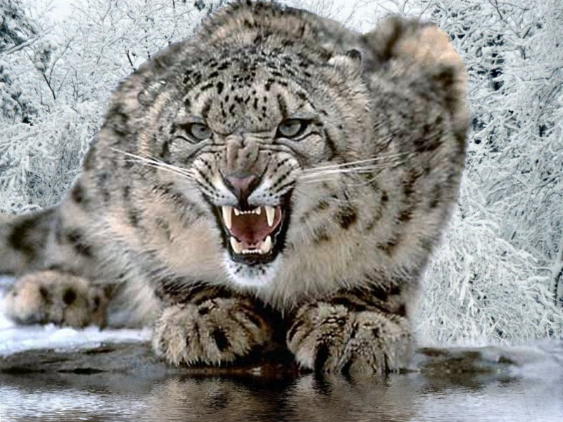 leopardo-2.jpg
