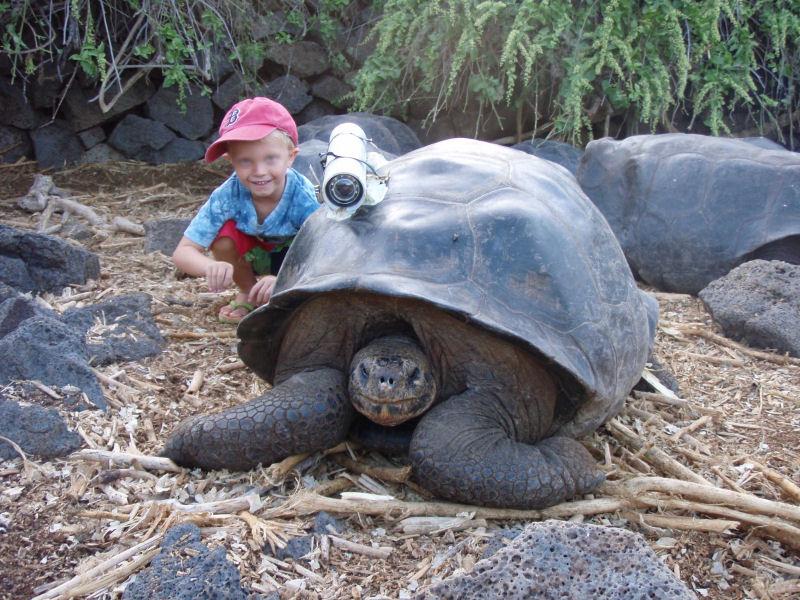 Zoo virtuale perch le tartarughe di terra si spostano for Termoriscaldatore per tartarughe