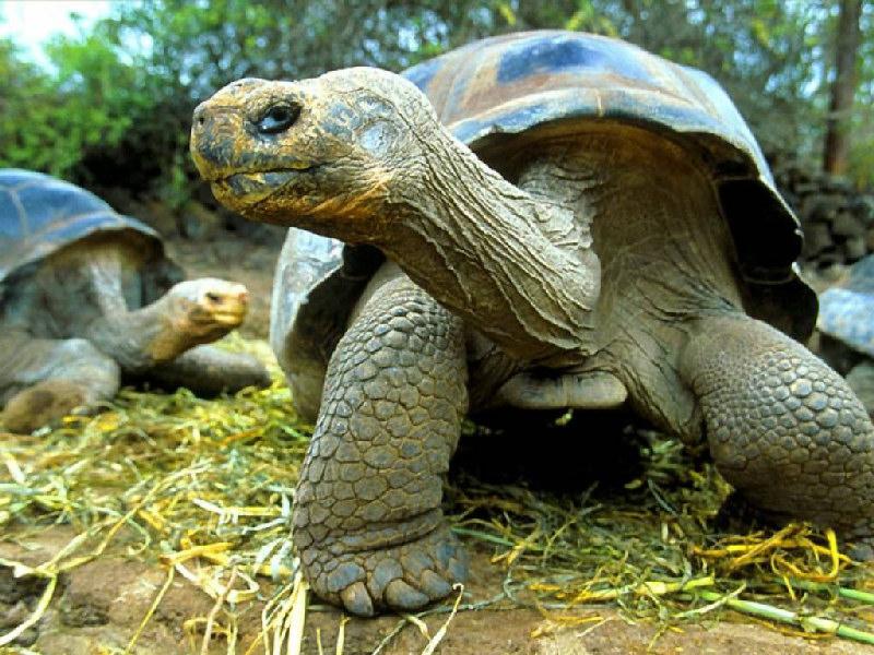 Zoo virtuale perch le tartarughe di terra si spostano for Tartarughe di terra prezzo basso