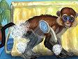 <b>Rilassa la Scimmia - Funny monkey