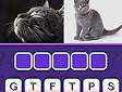 <b>Immagini e parole - Images word