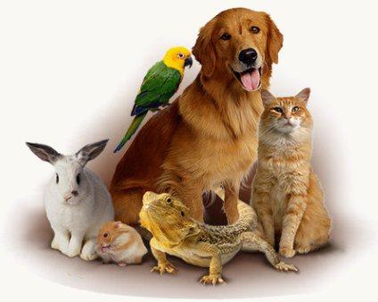 Nomi Per Animali Domestici Cani Gatti Rettili Roditori Pesci E