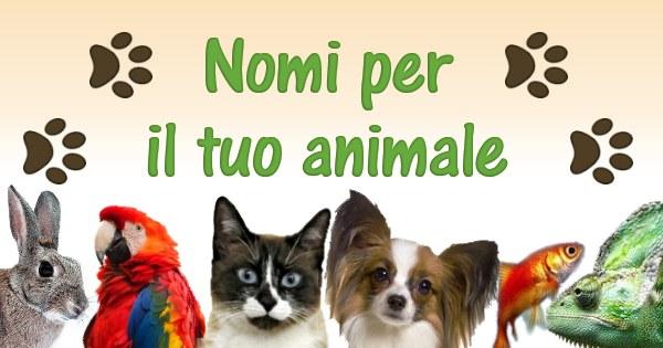 Nomi per animali nomi per cani hd app android su google for Nomi per tartarughe femmine