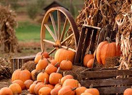 Risultati immagini per ottobre immagini