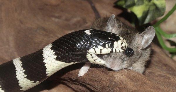 sognare di essere morsi da un serpente