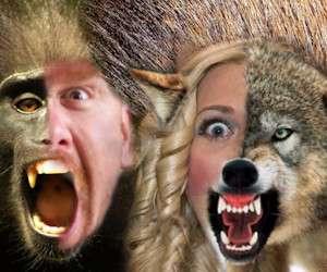 Che animale sei quando ti arrabbi?