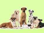 A quale cane assomigli?