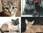 A quale Gatto assomigli?