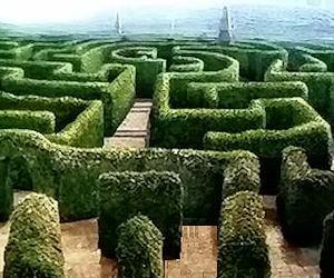 Test del labirinto di Watson